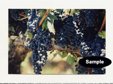 Old Vine Cab Grapes H